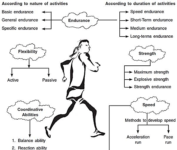Training in Sports Class 12 Notes Physical Education
