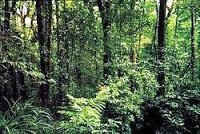 NCERT Solutions for Class 7 Social Science Geography Natural Vegetation and Wild Life